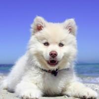 Mittelmeerkrankheiten bei Hunden