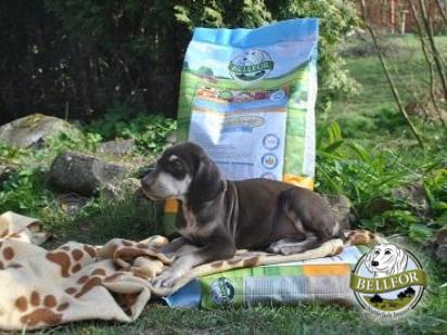 Nourriture sèche haut de gamme pour chiens